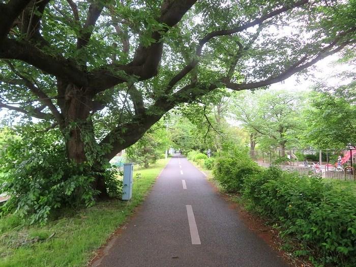 02_自転車道.jpg