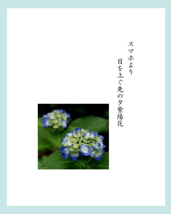 加川さん3.jpg