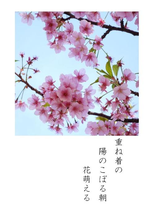 花はさくら_page-2.jpg