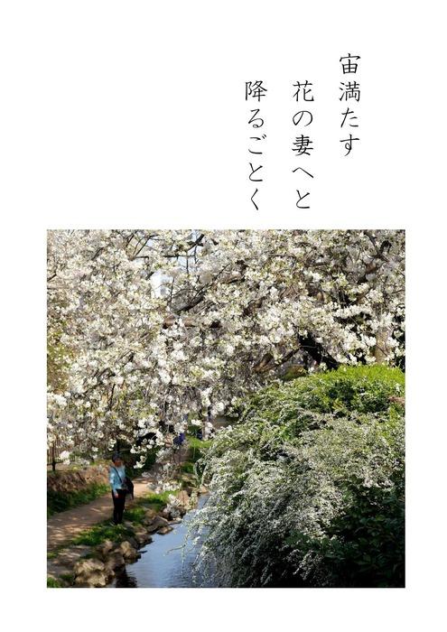 花はさくら_page-4.jpg